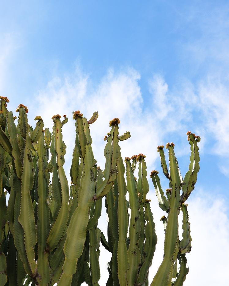 13_marbella cacti
